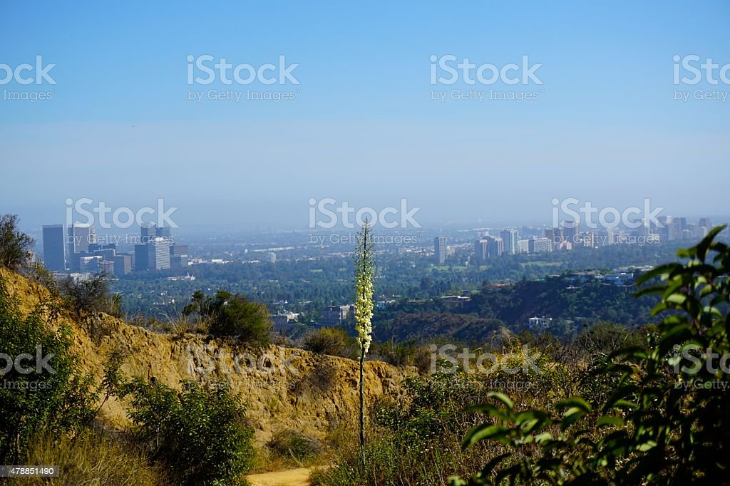 Wild Flower with City Background stock photo