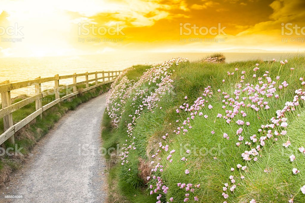 wild flowers along a cliff walk path stock photo