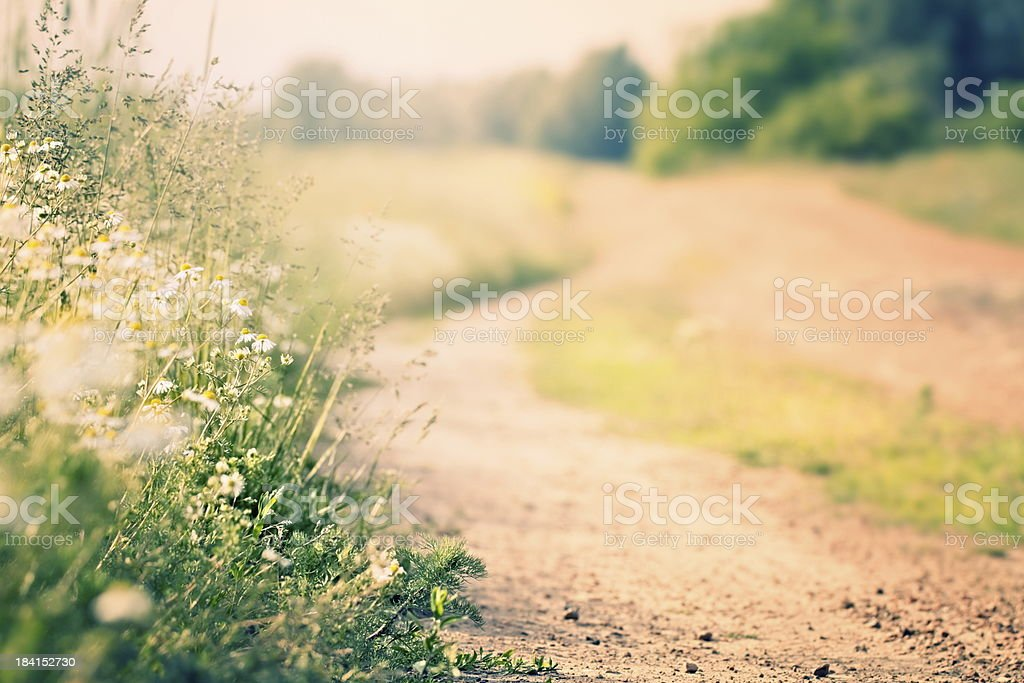 Wild flowers along the way stock photo