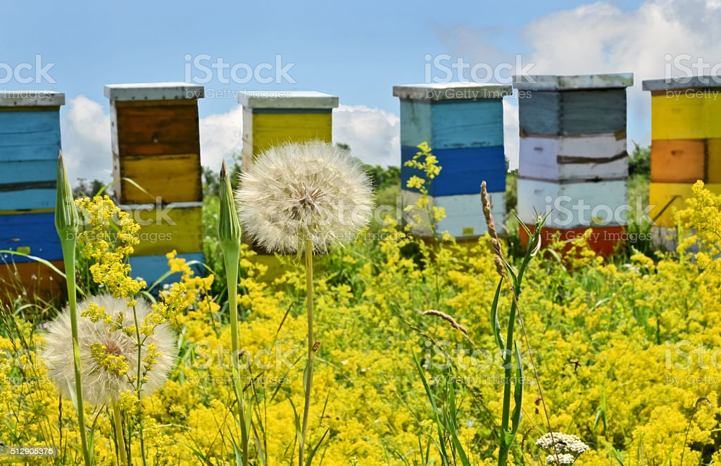 Wild flowers and beehives stock photo