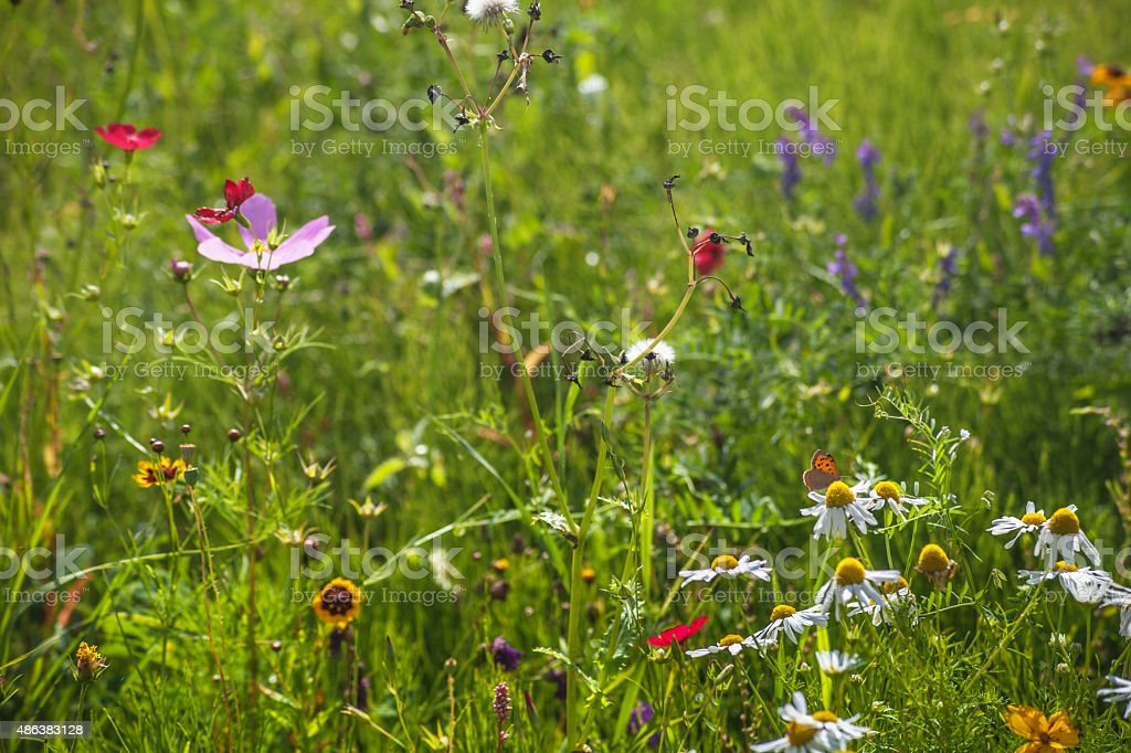 Wild Flowers and butterfly. stock photo