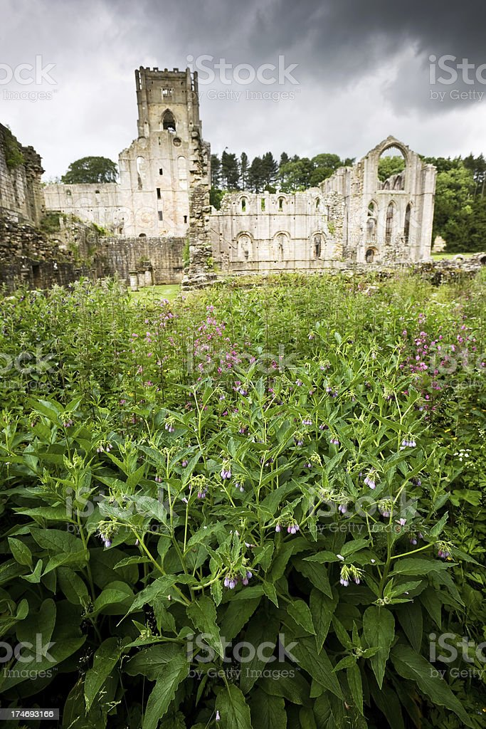 Wild Flowers and Ruined Abbey stock photo