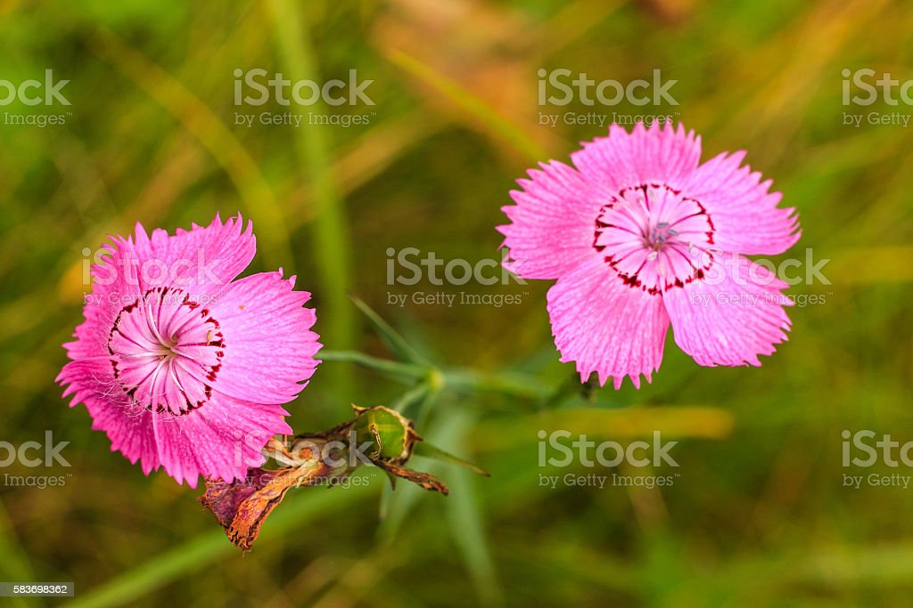 wild flowers at sunny day at meadow stock photo