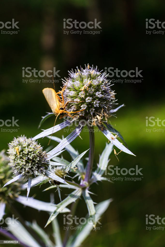 wild flowers at sunny day with insect at meadow stock photo