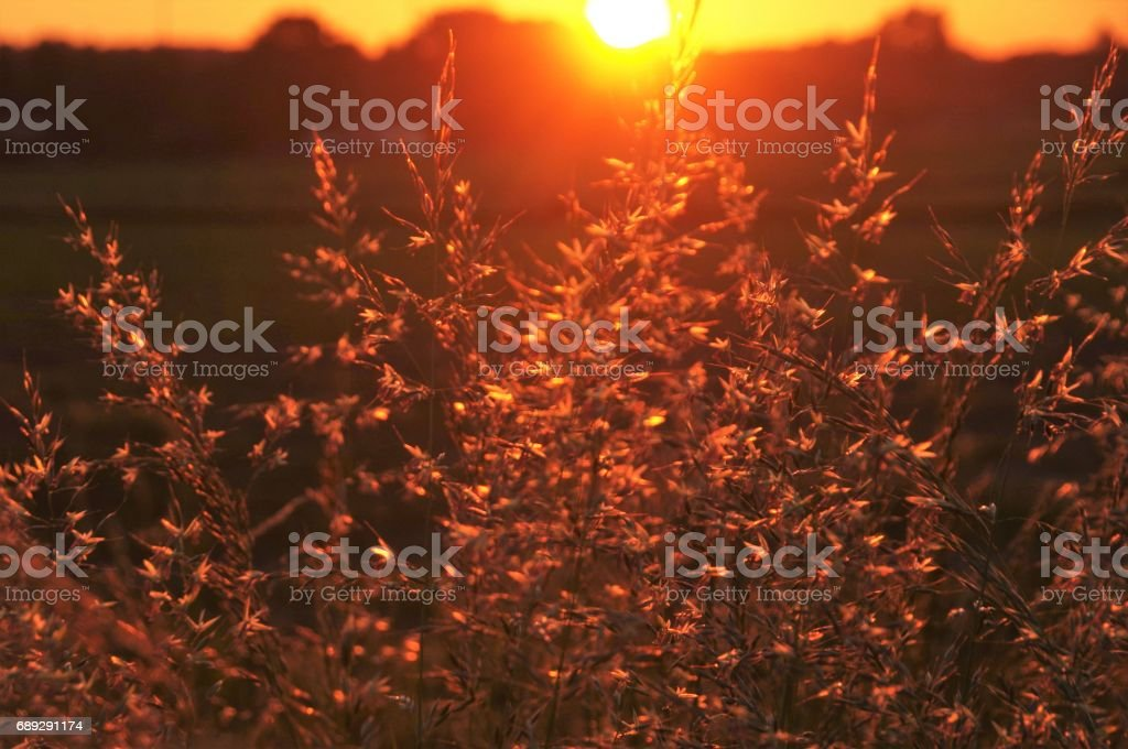 Wild flowers at sunrise stock photo