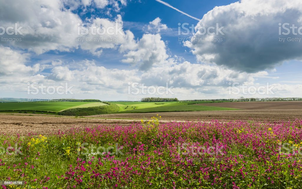 Wild flowers bordering farmland in the Wolds in spring/summer. stock photo