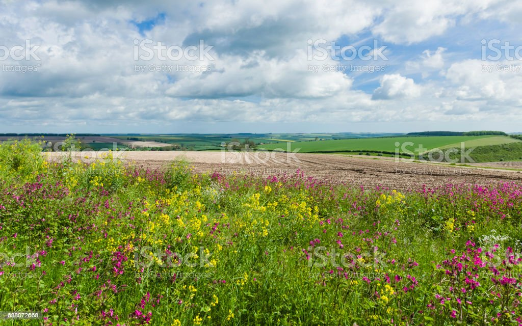 Wild flowers bordering farmland in the Wolds. stock photo