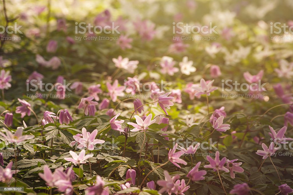 wild flowers carpet stock photo
