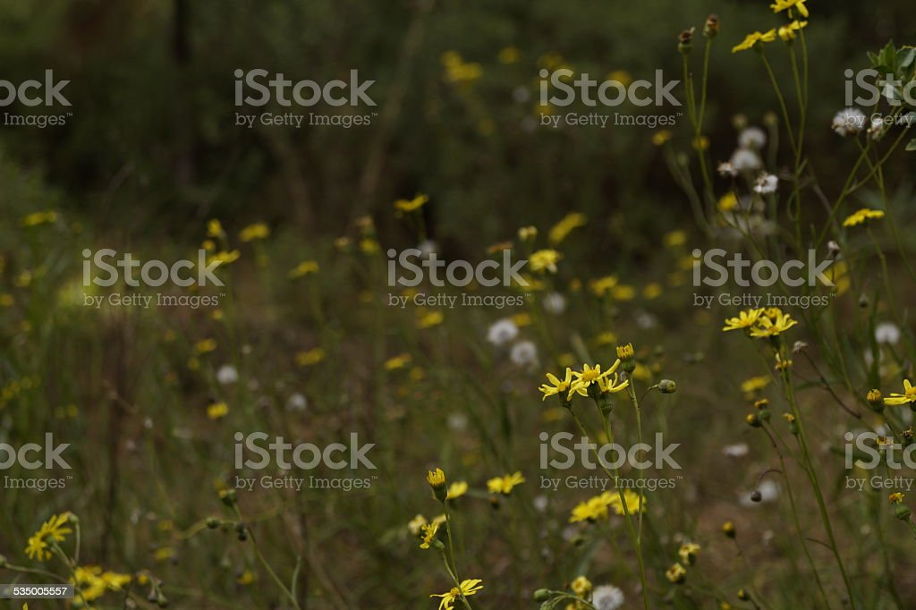 Wild Flowers, Colored Flowers stock photo