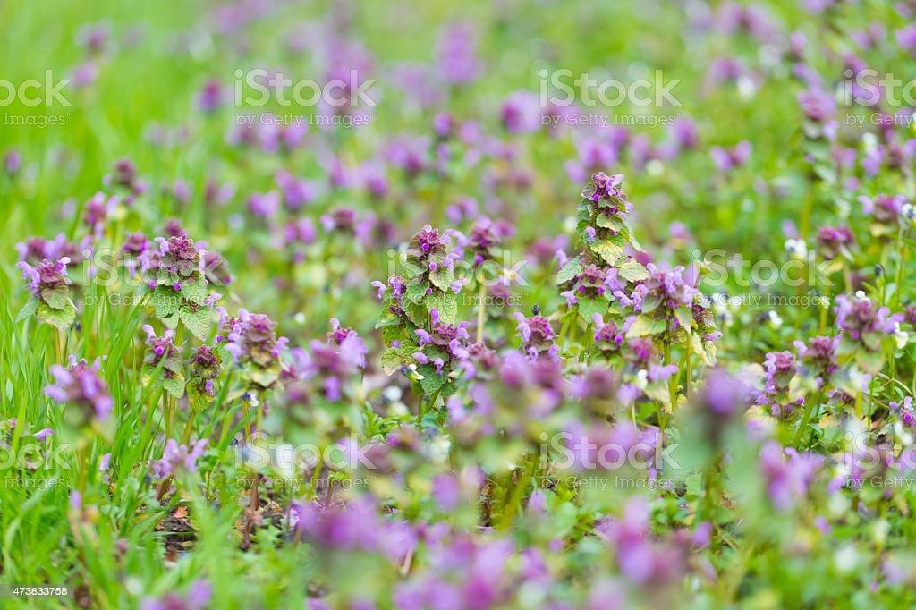 Wild flowers growing on field stock photo