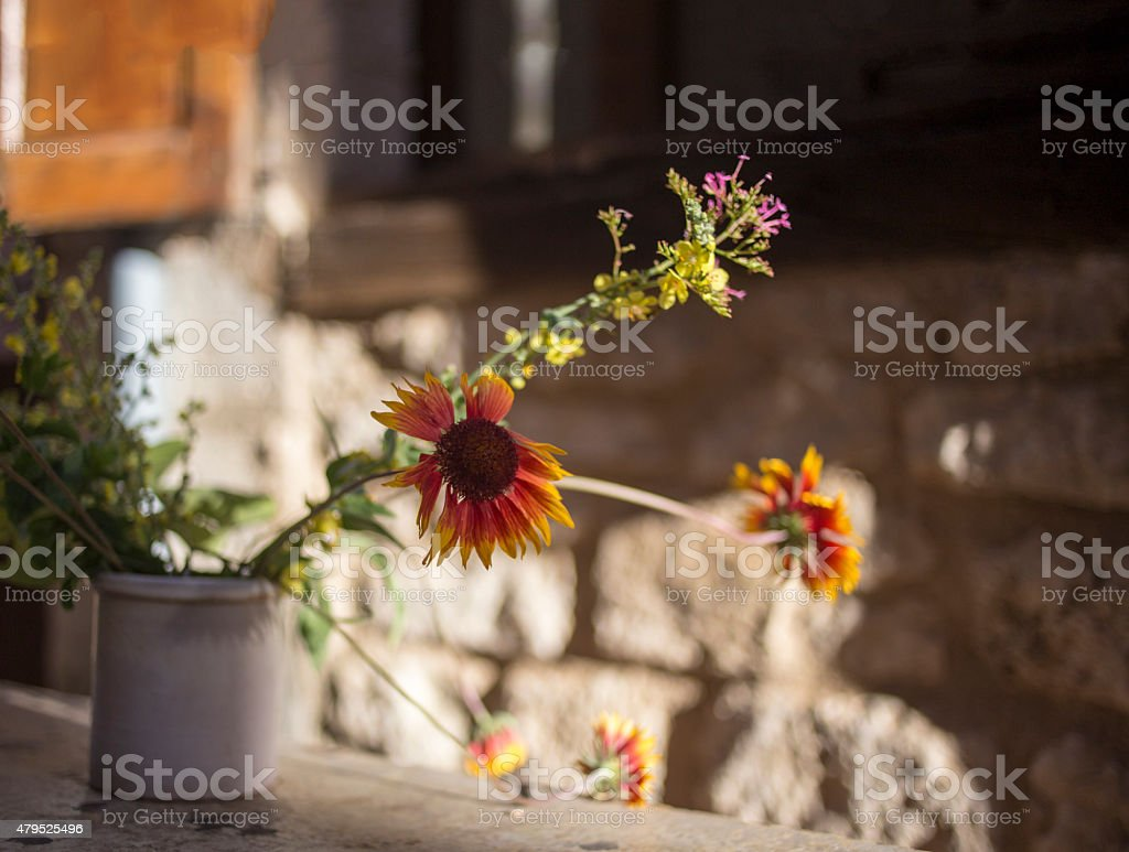 Wild flowers in a clay pot stock photo