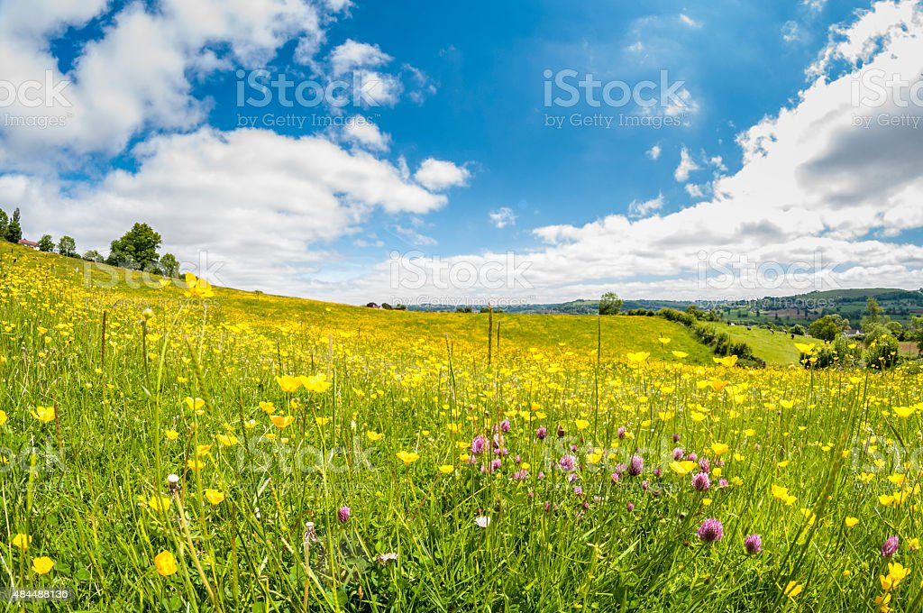 Wild Flowers In A Meadow stock photo