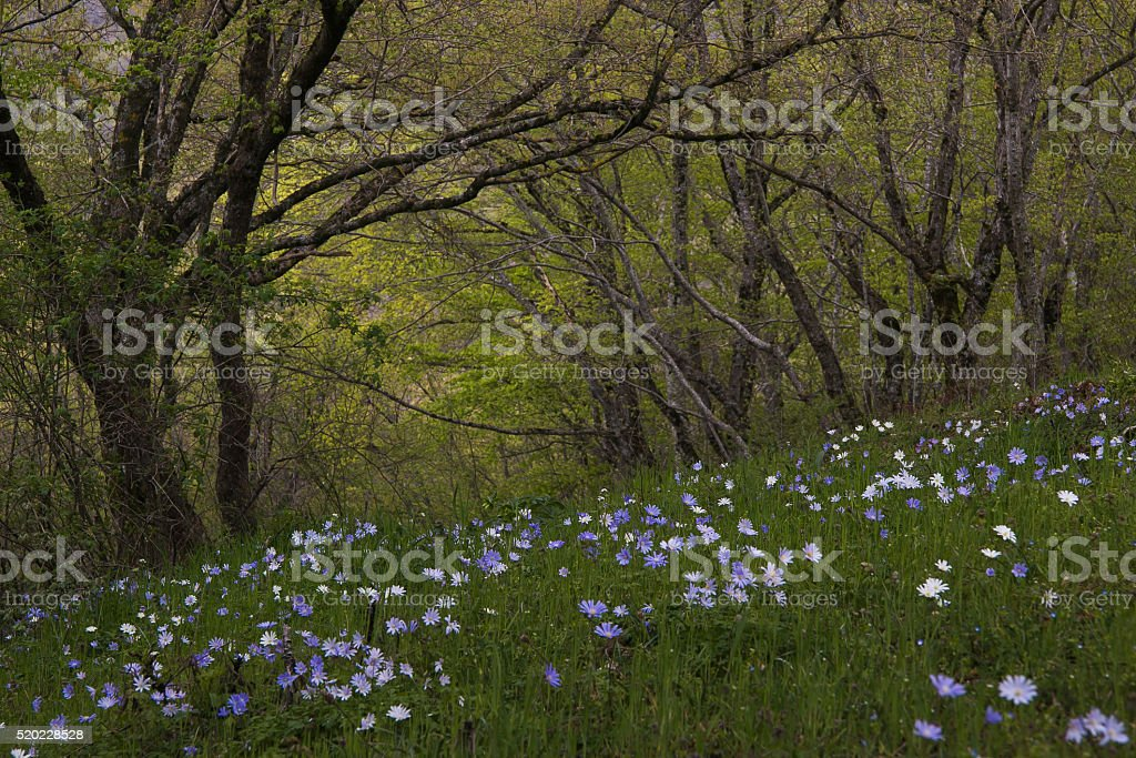 Wild flowers in the forest stock photo