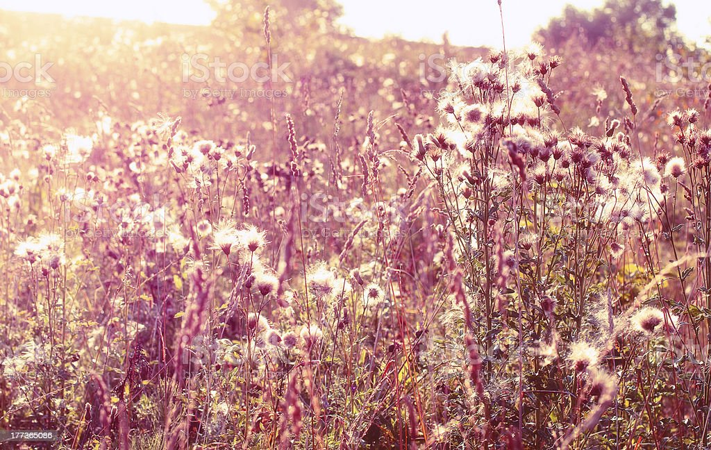 Wild flowers in the sun royalty-free stock photo