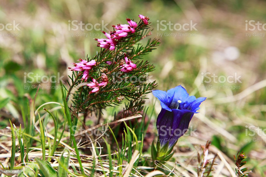 Wild flowers in woods royalty-free stock photo