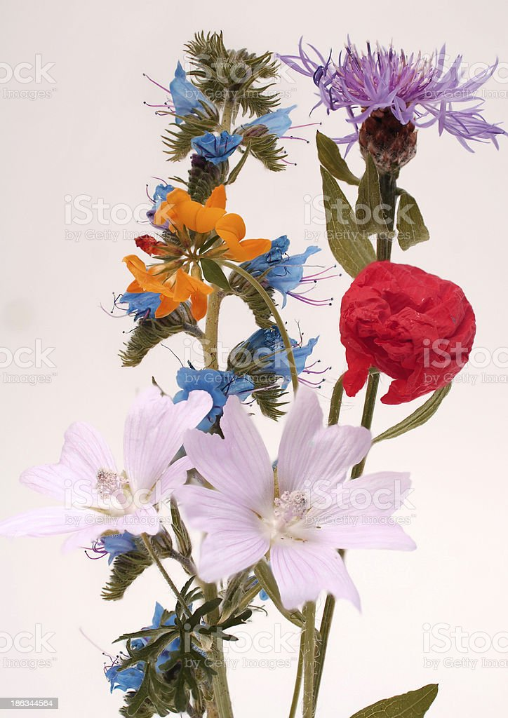 Wild flowers of different colors stock photo