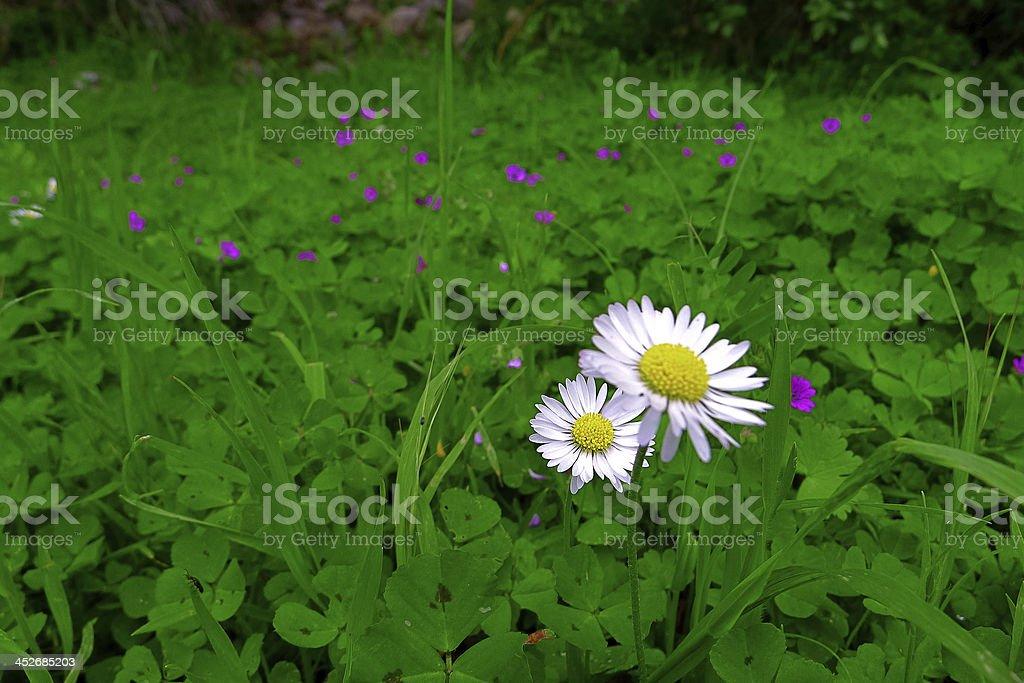 Wild flowers of mediterranean zone. stock photo