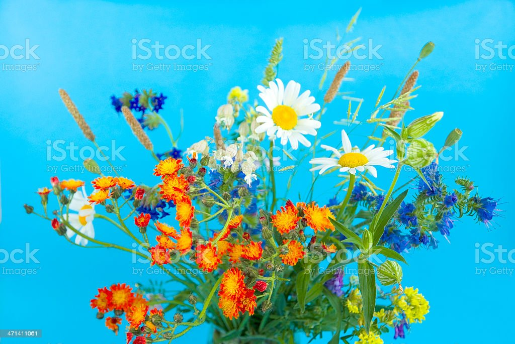 wild flowers on a blue background royalty-free stock photo