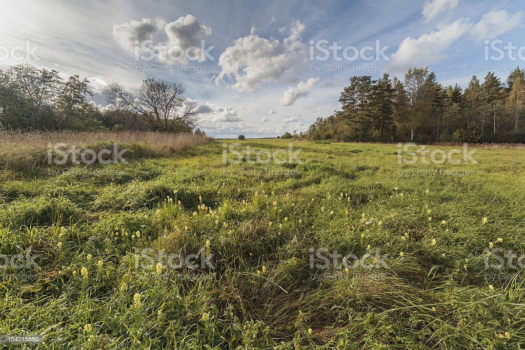 Wild flowers on an autumn field in the sunny day royalty-free stock photo