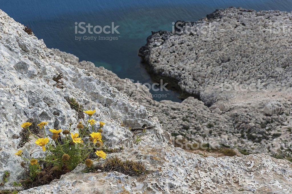 Wild flowers on cliffs stock photo