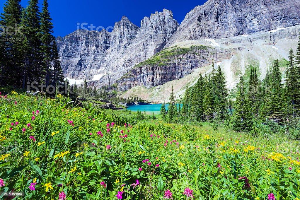 Wild flowers on the Iceberg Lake Trail stock photo