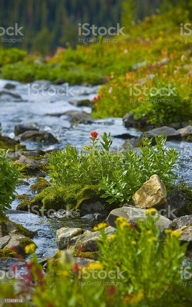 野生の花 ロイヤリティフリーストックフォト
