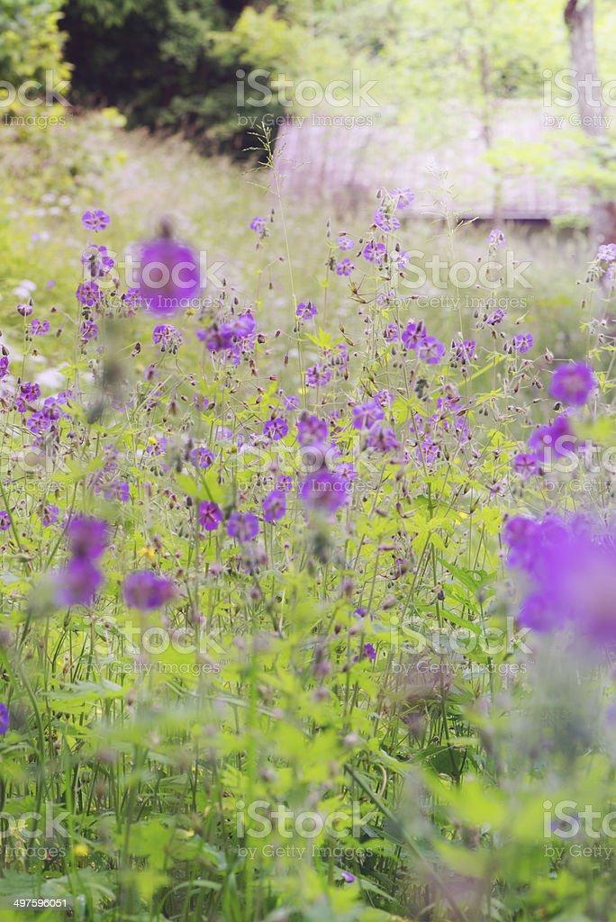 Wild Flowers royalty-free stock photo