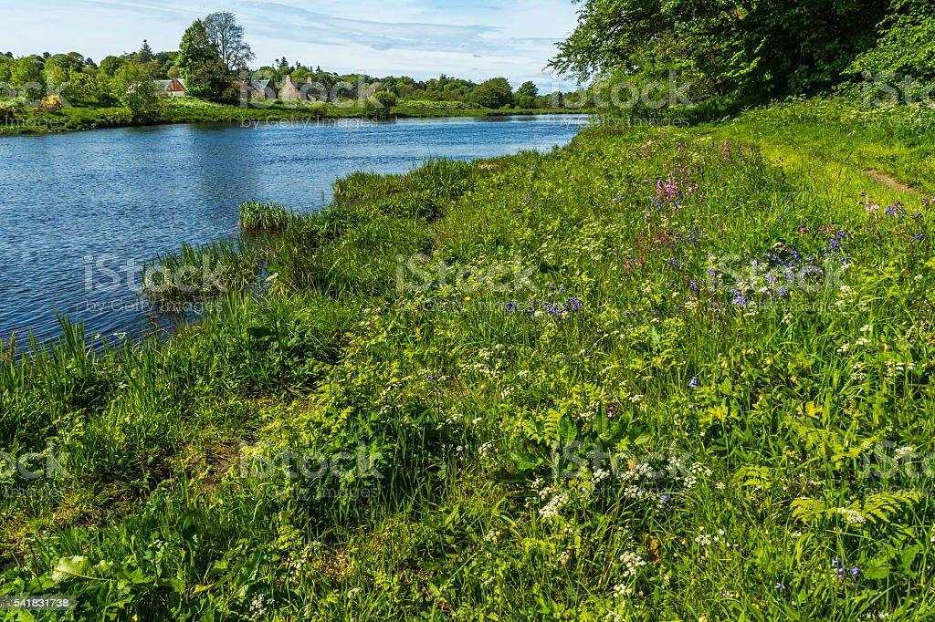 Wild Flowers Riverbank stock photo