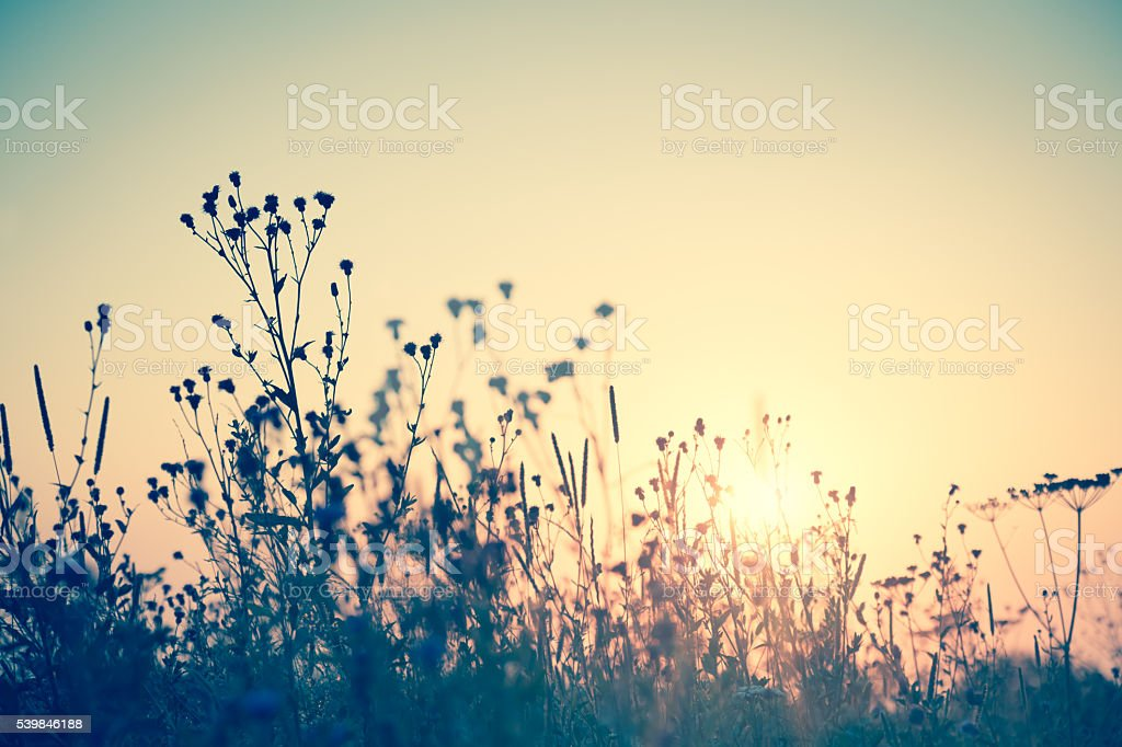 Wild flowers silhouette against sun, vintage stock photo