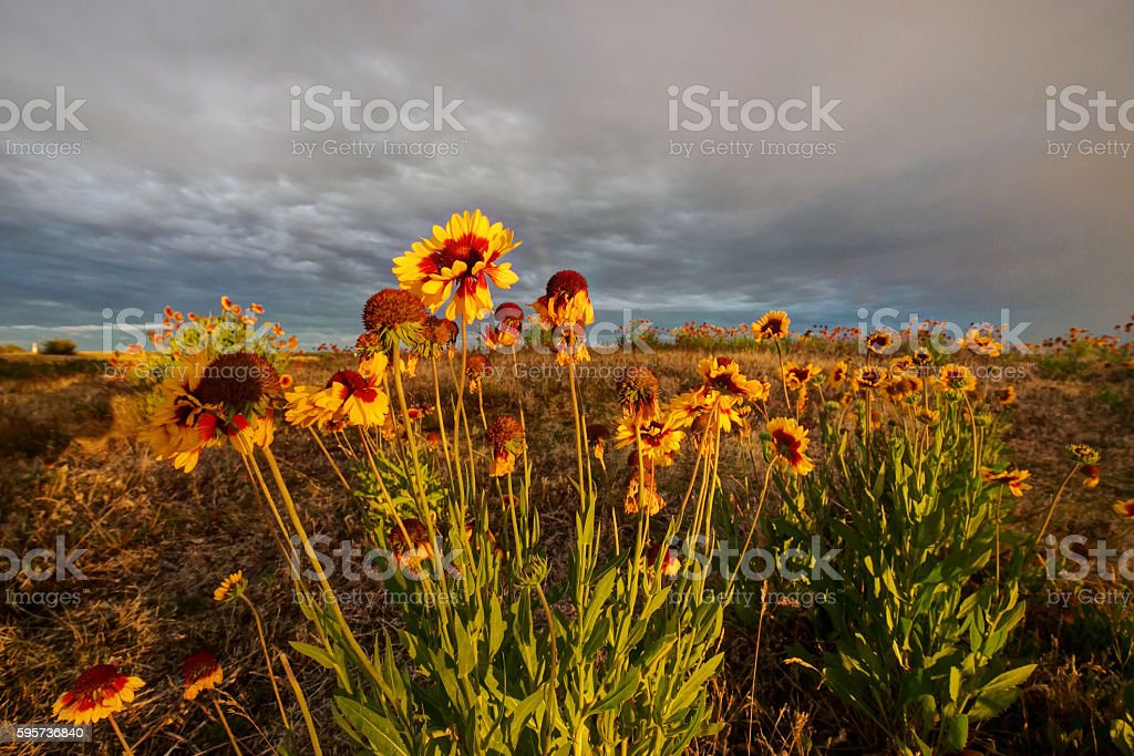 wild flowers with sunset light in a park stock photo