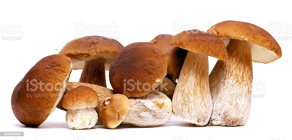 Wild Foraged Mushroom selection isolated on white background, with shadow stock photo