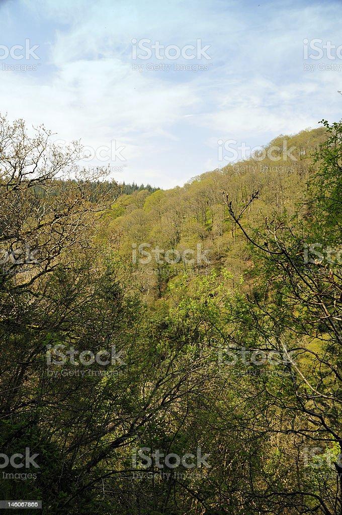 Wild Forest hills Lizenzfreies stock-foto