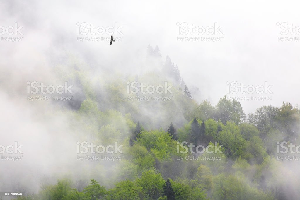 wild forest royalty-free stock photo