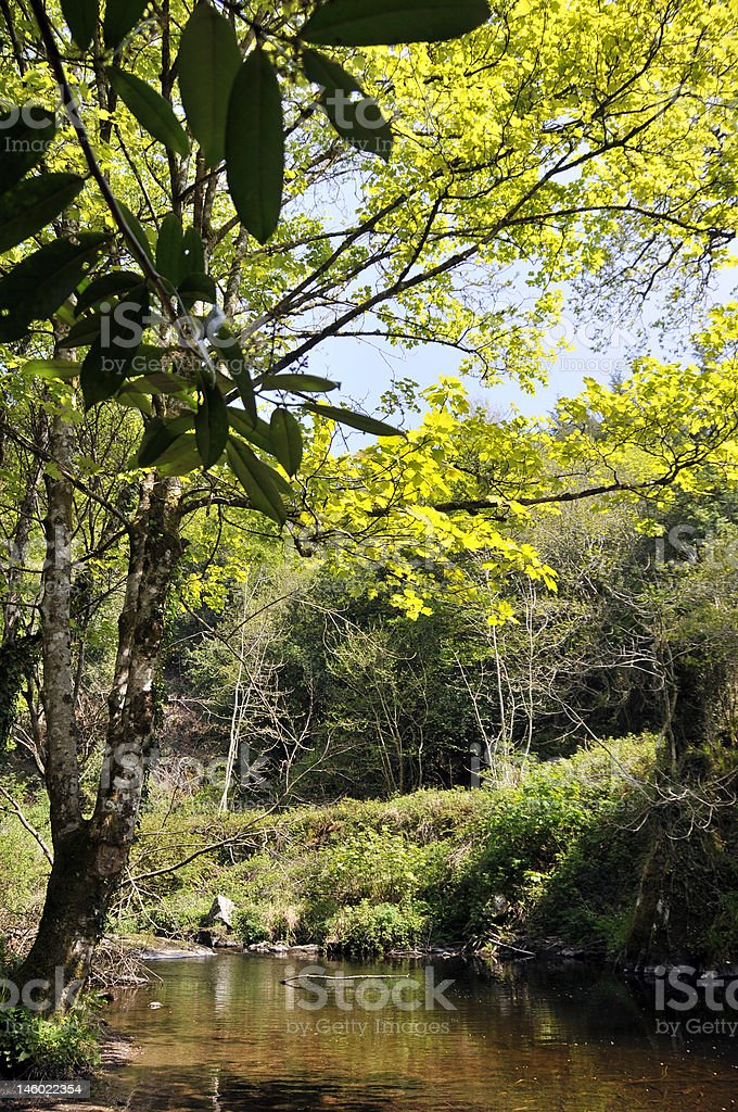 Wilden Wald-Fluss Lizenzfreies stock-foto
