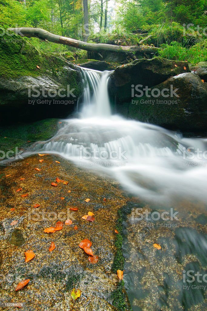 Wild Forest Stream royalty-free stock photo