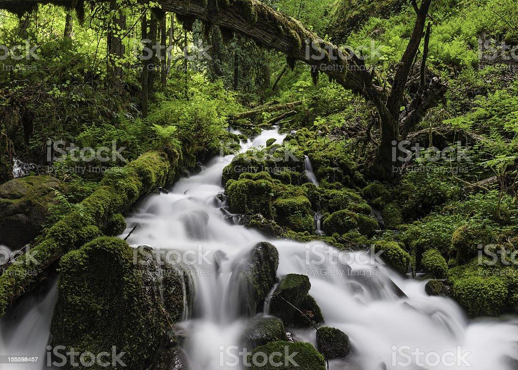 Wild forest waterfall idyllic green wilderness stock photo