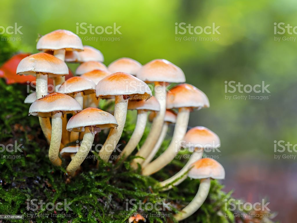 wild forrest mushroom stock photo