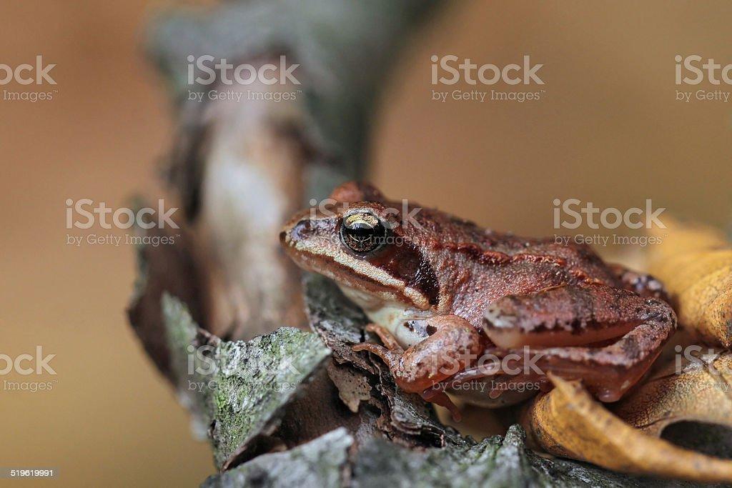 Wild frog stock photo