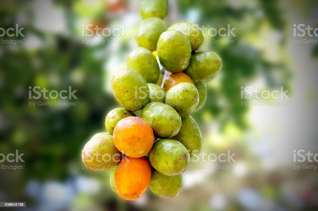 Wild fruit stock photo