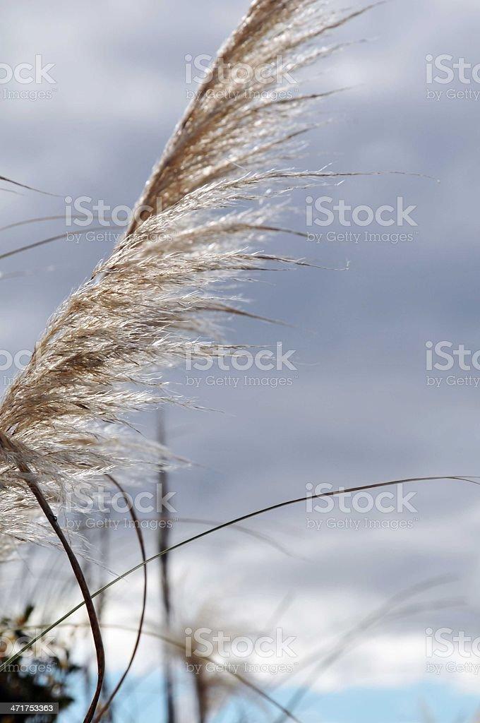 Wild Grass royalty-free stock photo