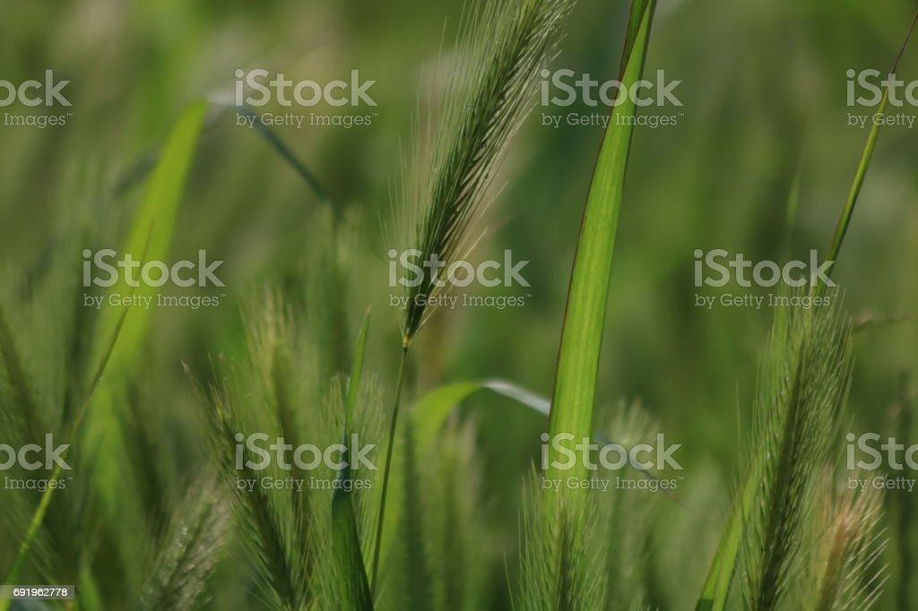 Wild grass stock photo