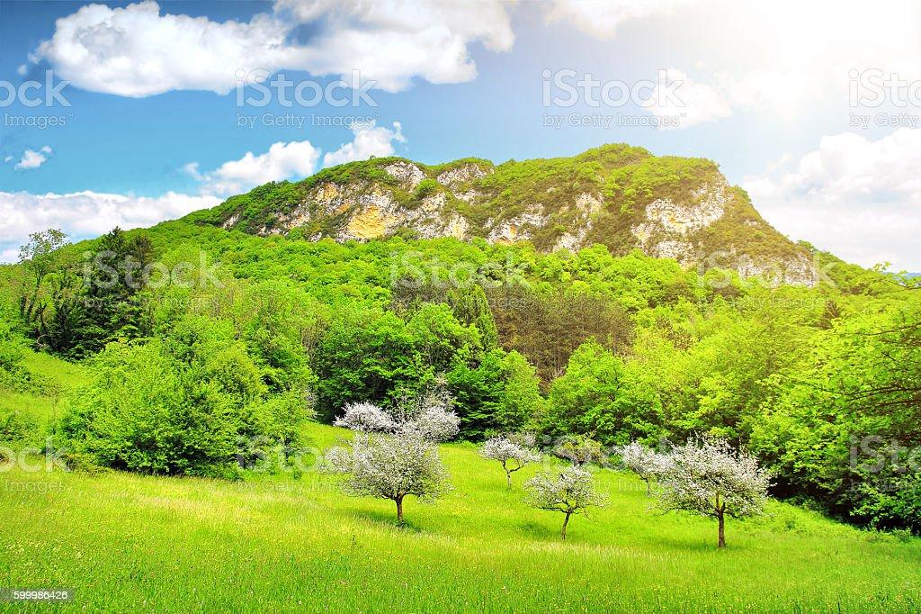 Wild grass prairie with large beautiful mountain under bright sunlight stock photo