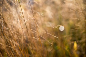 Wild grass selective focus nature abstract background