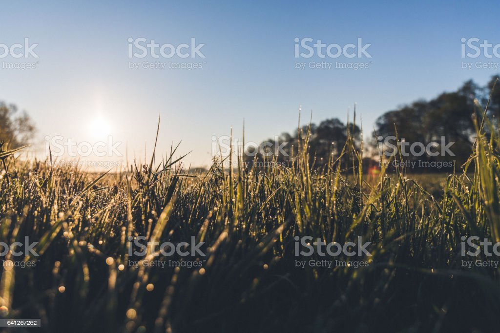 Wild grasses at the meadow against bright sunlight in summer stock photo