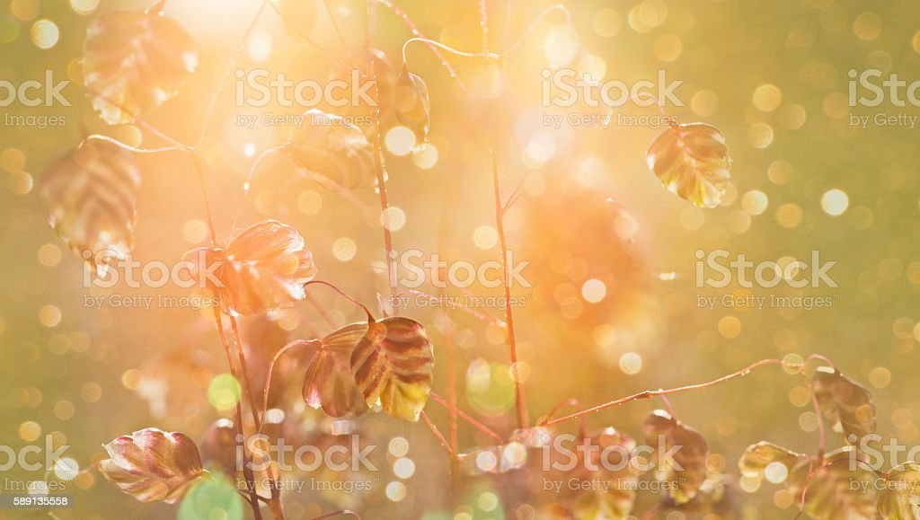 Wild grasses in the sunlight blurred natural background. stock photo