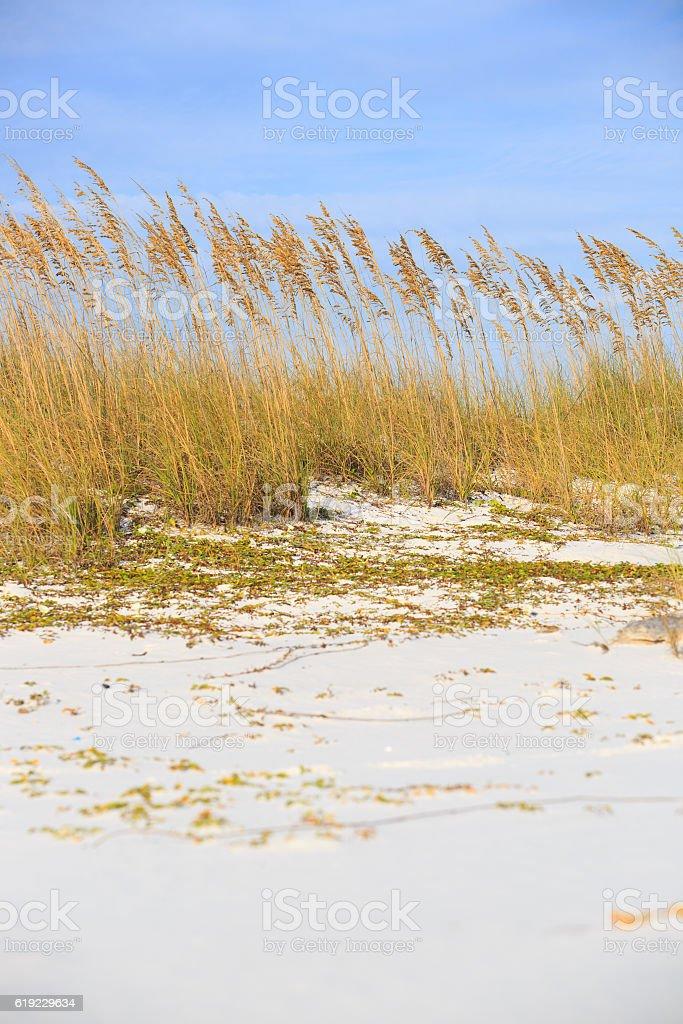 Wild grasses on Henderson state park beach sea coast. royalty-free stock photo