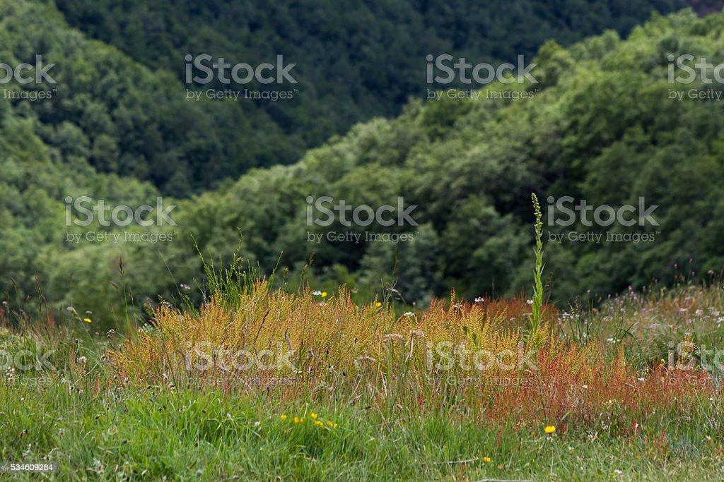 Wild Herbs - Hierbas Silvestres stock photo