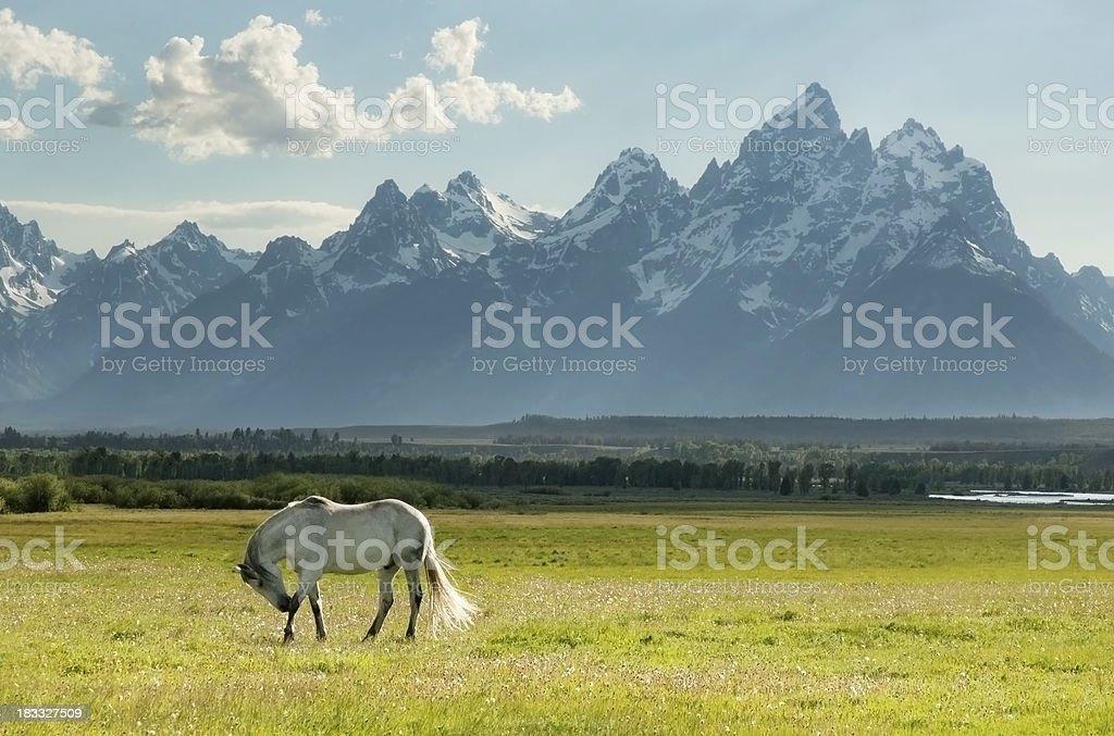Wild Horse and Grand Teton mountains royalty-free stock photo