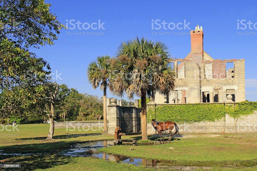 Wild Horse and Historical Ruins - Cumberland Island, Georgia stock photo