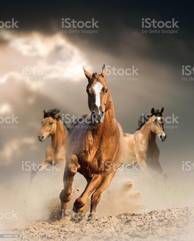 wild horse in dust stock photo